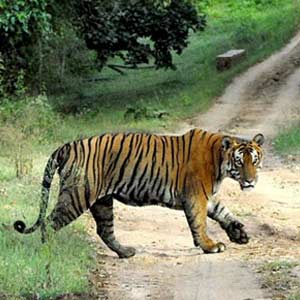 About Wildlife in Odisha