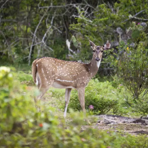 Debrigarh-Wildlife-Sanctuary